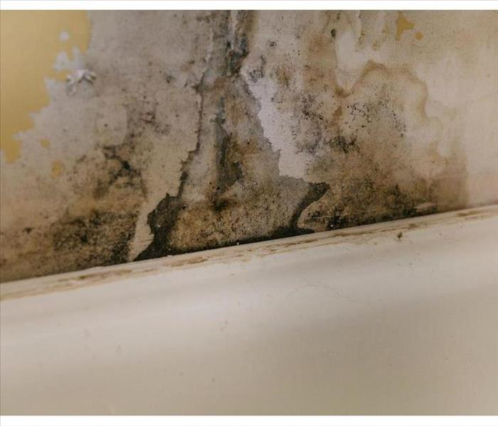 Mold growth on wall due to humidity